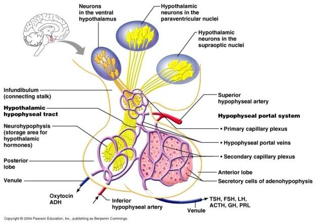 brain-OT